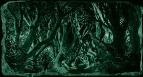3D Mural Wall Art Walk through the trees, Glowing in the dark, 1.50 x 0.82 m