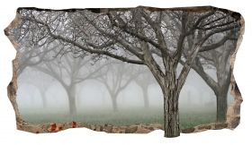 3D Mural Wall Art Trees in the fog, Glowing in the dark, 2.20 x 1.20 m