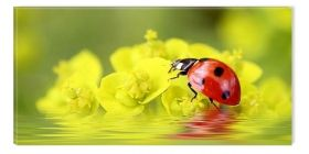 Canvas Wall Art Ladybug, Glowing in the dark, 60 x 120 cm