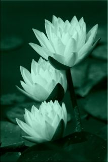 Canvas Wall Art Water lilies, Glowing in the dark, 60 x 90 cm