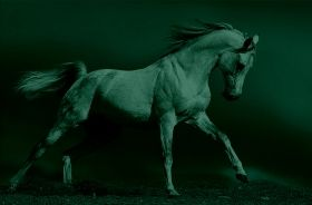 Glass Wall Art Arab horse, Glowing in the dark, 60 x 90 cm