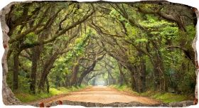 3D Mural Wall Art Tree tunnel, Glowing in the dark, 1.50 x 0.82 m