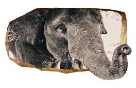 3D Mural Wall Art An elephant, Glowing in the dark, 1.50 x 0.82 m