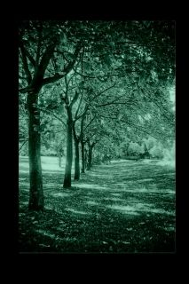 Canvas Wall Art Trees in a row, Glowing in the dark, 80 x 120 cm