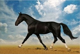 Canvas Wall Art Arab horse in desert, Glowing in the dark, 80 x 120 cm