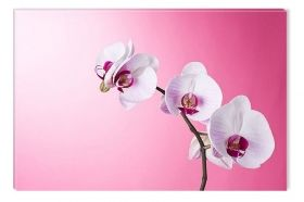 Canvas Wall Art Orchids on pink, Glowing in the dark, 80 x 120 cm