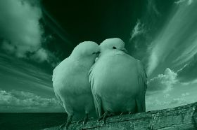 Canvas Wall Art White pigeons, Glowing in the dark, 60 x 90 cm