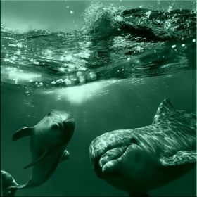 Canvas Wall Art Two dolphins, Glowing in the dark, 80 x 80 cm
