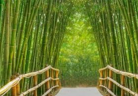 Mural Wall Art Bamboo Alley, Glowing in the dark, 1.83 x 1.28 m