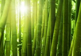 Mural Wall Art Green bamboo, Glowing in the dark, 3.66 x 2.56 m