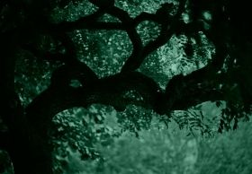 Mural Wall Art Green tree, Glowing in the dark, 3.66 x 2.56 m