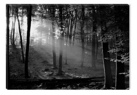 Glass Wall Art Morning in the woods in black and white, Glowing in the dark, 60 x 90 cm