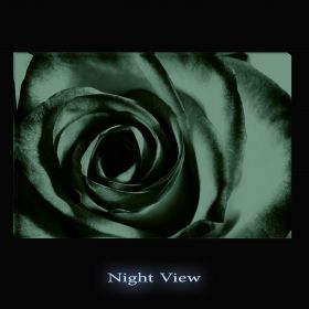 Canvas Wall Art Purple Rose, Glowing in the dark, 60 x 90 cm