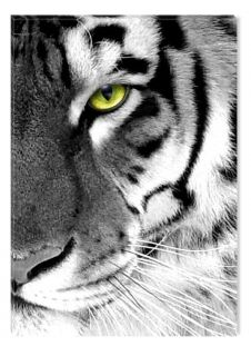 Black and White Abstract Canvas Wall Art Tiger Eyes, Glowing in the Dark, 60 x 90 cm